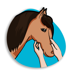Ateliers bien-être - développement cohésion - horse coaching